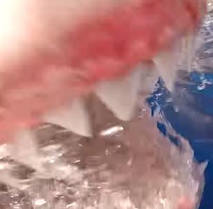 El escalofriante momento en el que un enorme tiburón blanco ataca a un camarógrafo