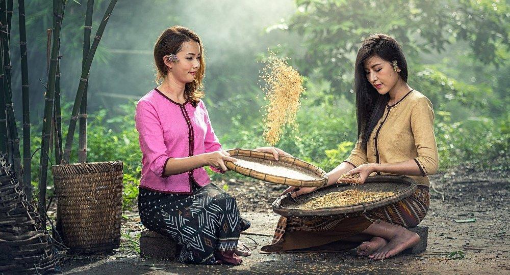 Mujeres seleccionan arroz