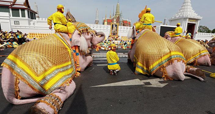 Desfile de elefantes en Bangkok, Tailandia