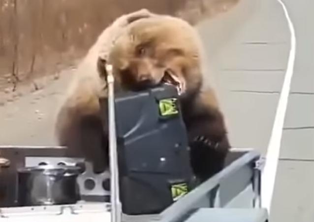 Solo en Rusia: un oso les roba una nevera a unos cazadores