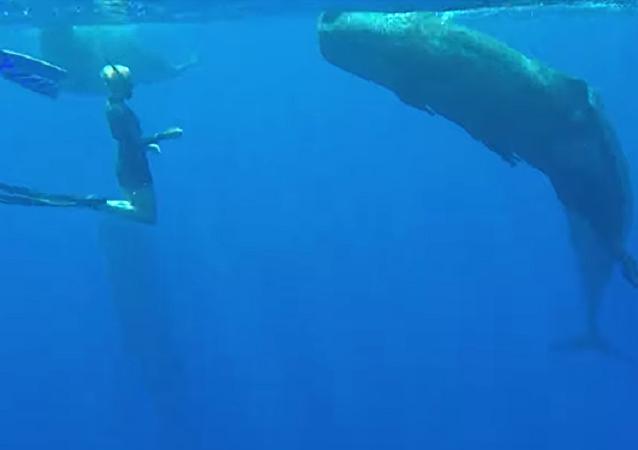 Diferentes pero iguales: una buceadora nada junto a una ballena gigante
