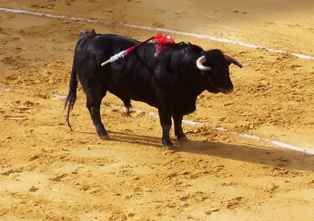 Un toro, foto de archivo
