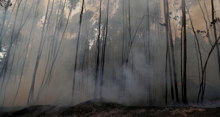Un bosque tras el incendio forestal (imagen referencial)