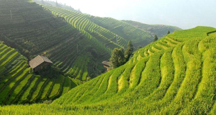 Un campo en China