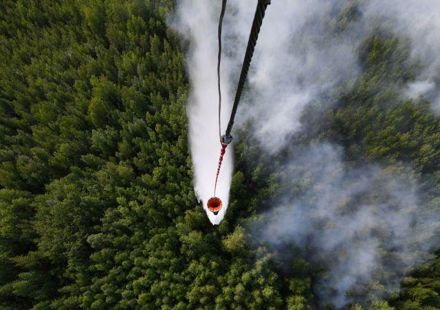Lucha contra incendios forestales en Rusia (archivo)