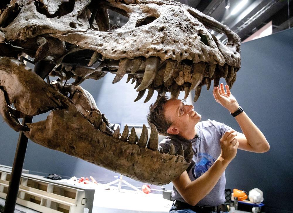 Incendios, dinosaurios y miel: estas son las imágenes de la semana