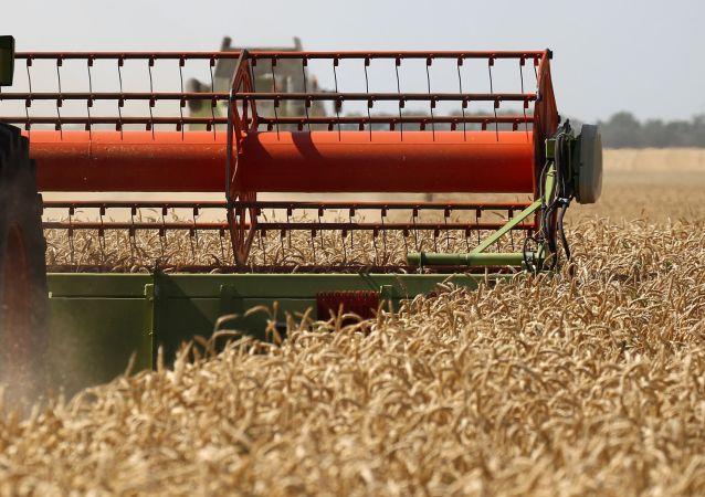 Cosecha de trigo en la región rusa de Krasnodar
