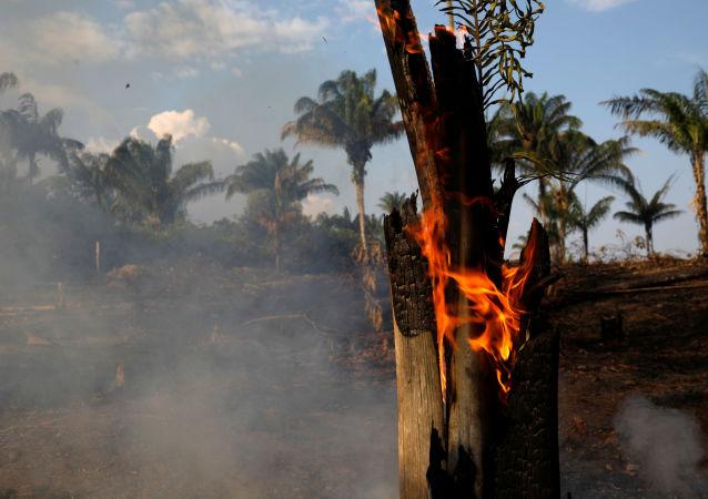 Incendios forestales en Amazonía