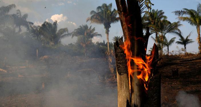 Un tronco se quema en medio de los incendios que afectan a la selva amazónica