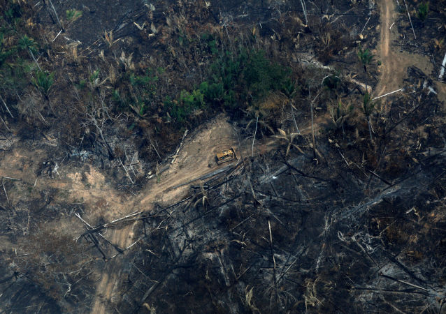 Consecuencias de los incendios en la Amazonía