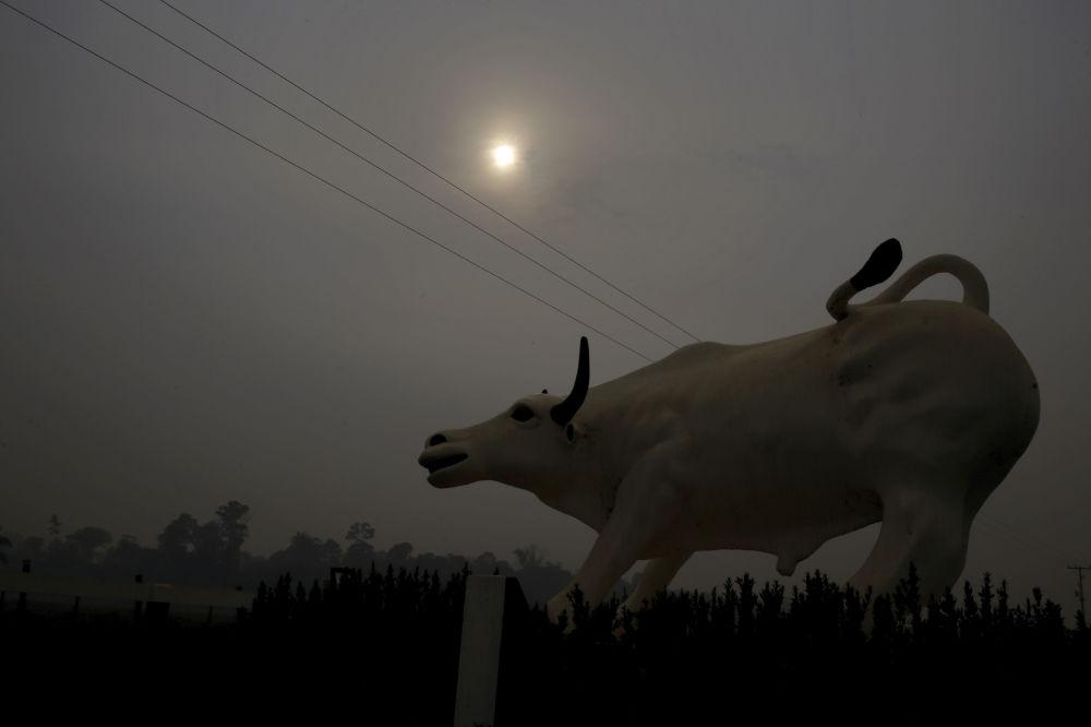 Tierra cubierta de cenizas: los incendios forestales en la Amazonía