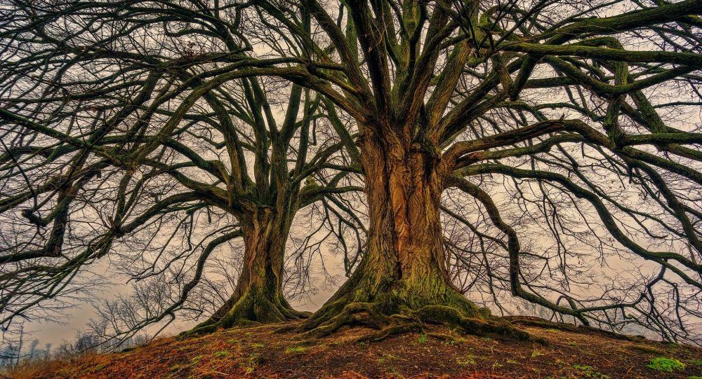 Árboles, árbol (imagen referencial)