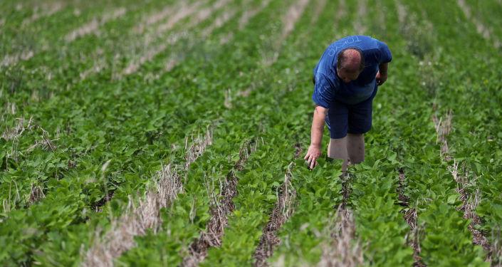 Un agricultor argentino en un campo de soja
