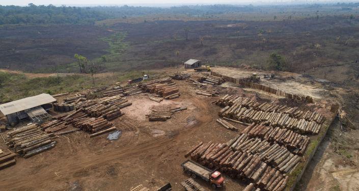 Leño en la Amazonía