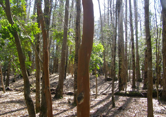 Bosque nativo chileno