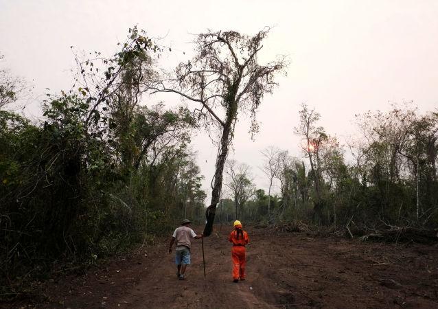 Consecuencias de los incendios forestales en Bolivia