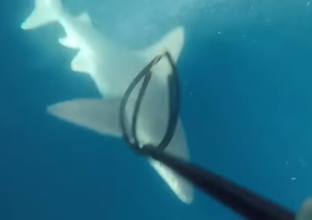 Un pescador encuentra a una presa más peligrosa de lo que esperaba