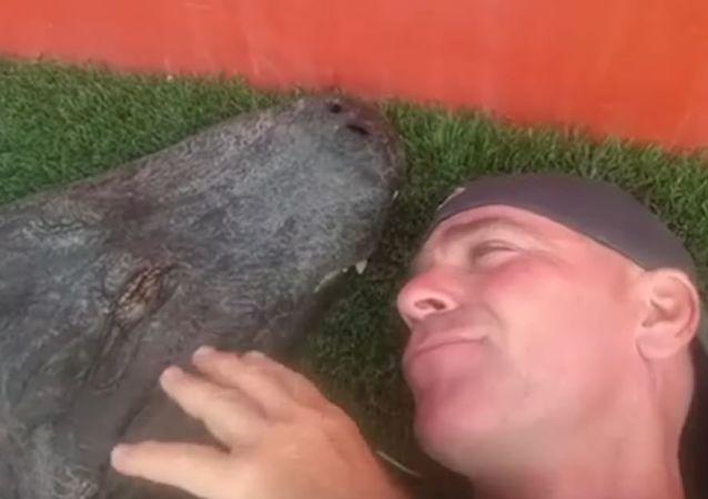Confianza total: un hombre conversa y besa a un enorme caimán