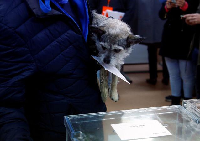 Un perro en un colegio electoral en España