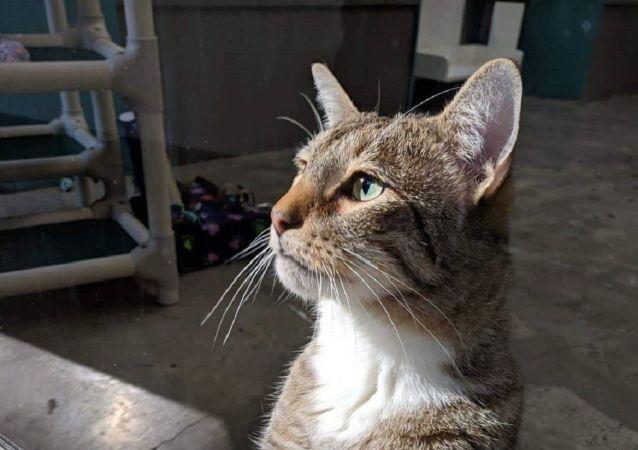 El gatito Quilty