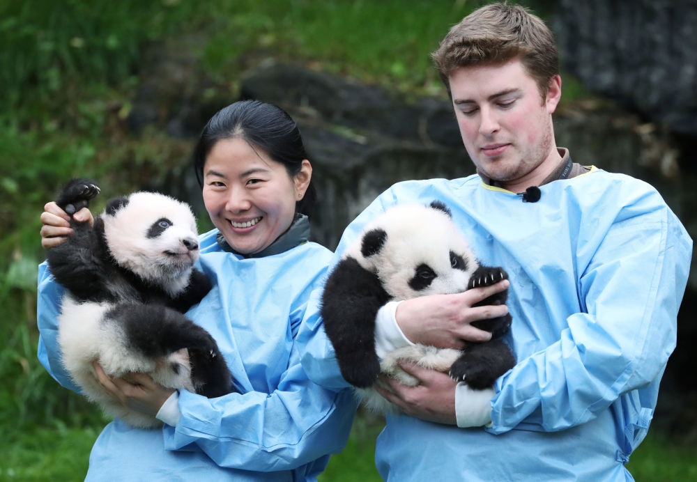 Los nombres Bao Mei y Bao Di significan hermana menor y hermano menor de Tian Bao. Tian Bao es el hermano mayor de los niños. El oso, nacido en 2016, fue el primer panda en nacer en territorio europeo.