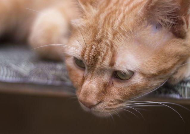 Un gato triste, referencial