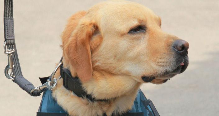 Perro policía, imagen referencial