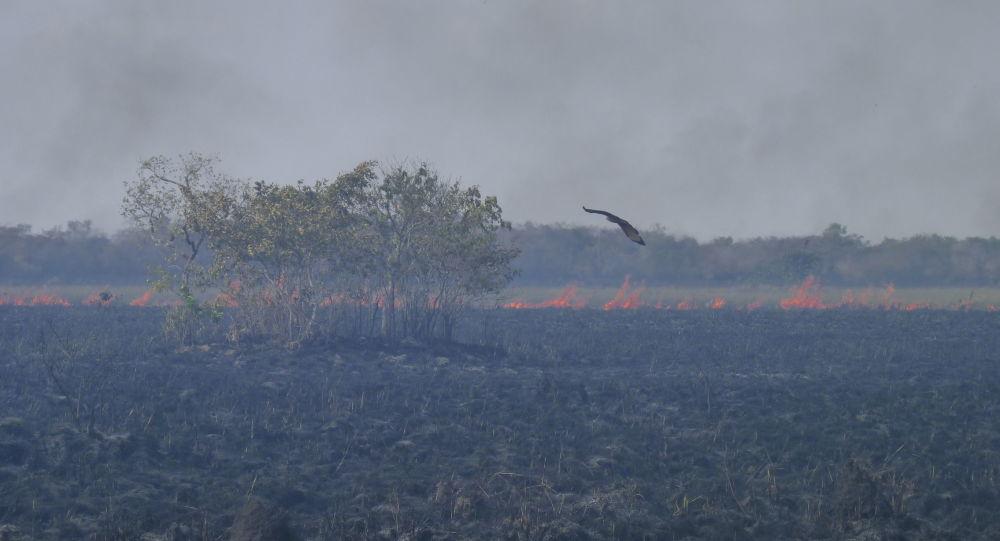 Incendios en la Amazonía (archivo)
