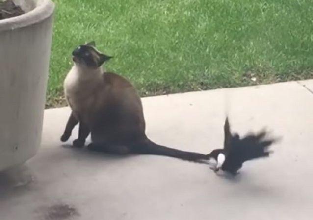 Un gato y una urraca