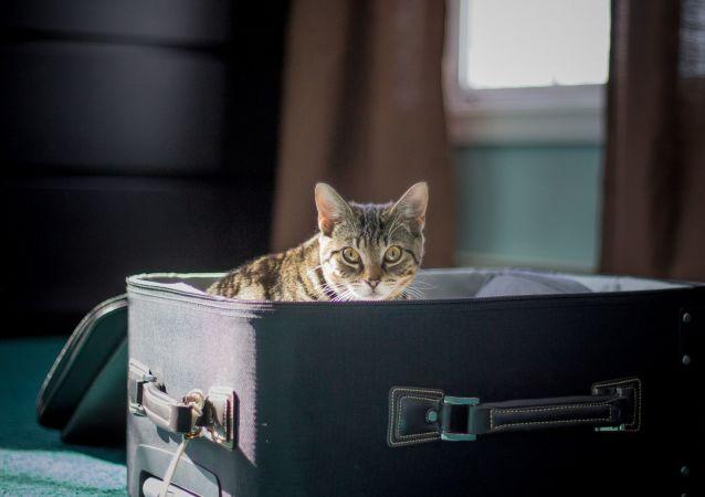 Un gato en una valija de viaje