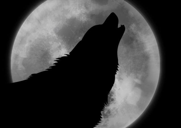 La Luna y un lobo