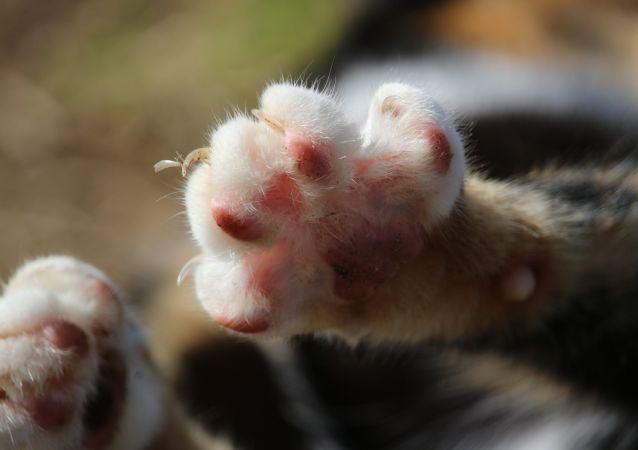 Un gato, imagen referencial