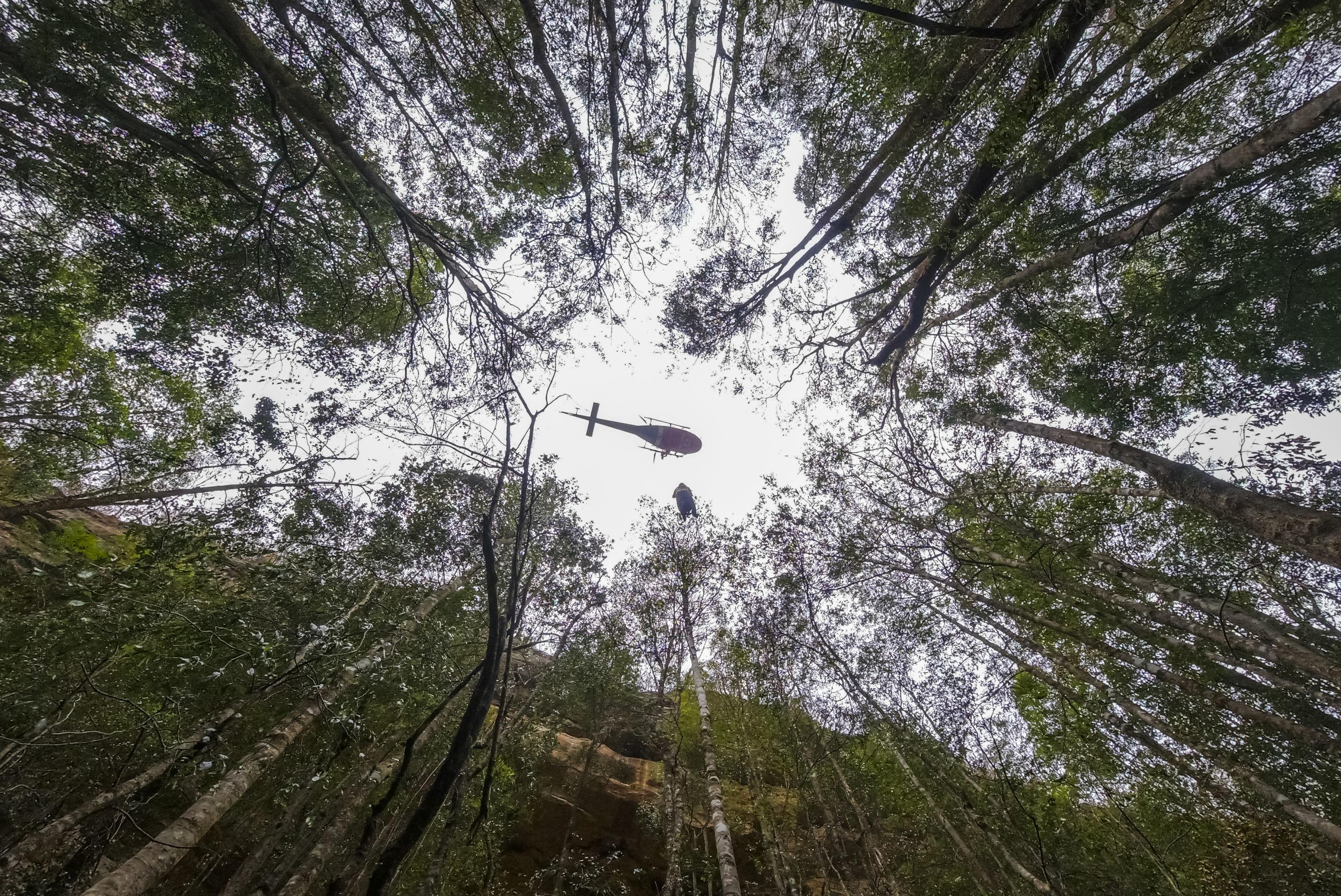 Bomberos y rescatista autralianos protegen los pinos de Wollemi de los incendios
