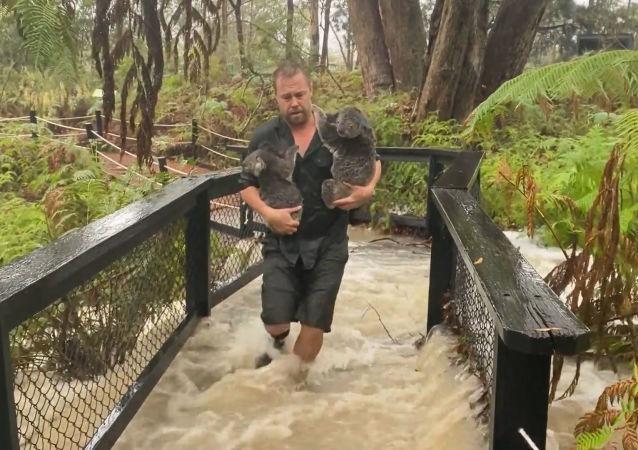 La lluvia y el granizo azotan Australia tras meses de incendios forestales