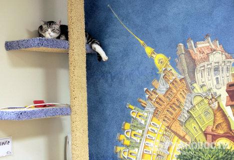 Первое котокафе Республика кошек открылось в Санкт-Петербурге