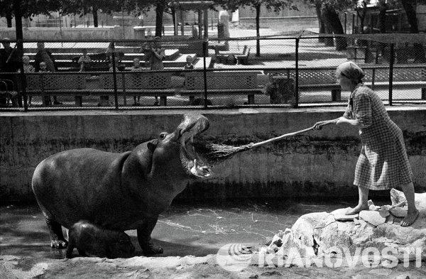 В Московском зоопарке. 1944 год