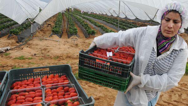Una mujer marroquí recoge fresas en Huelva - Sputnik Mundo
