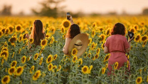 Девушки во время цветения подсолнечника на поле в Симферопольском районе - Sputnik Mundo