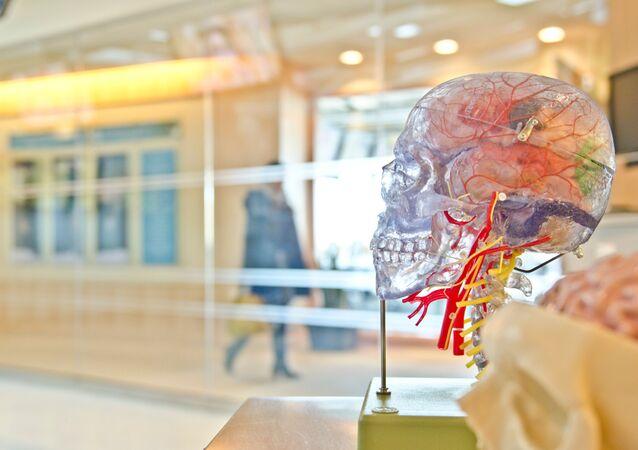 El modelo transparente del cerebro