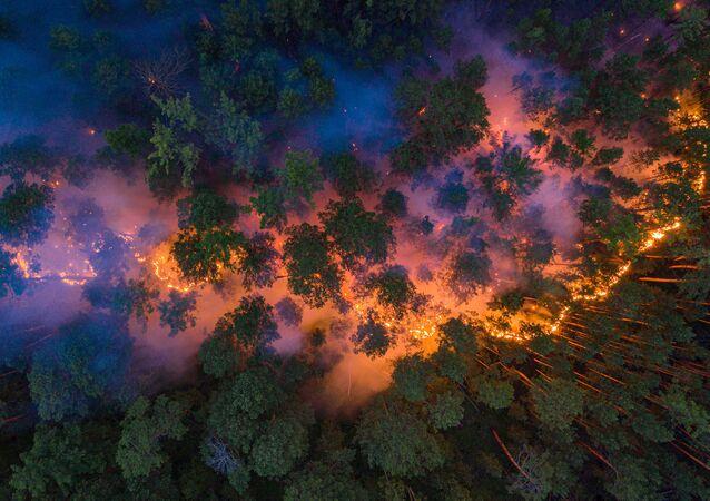 Siberia en llamas: así arden los bosques más inaccesibles del planeta