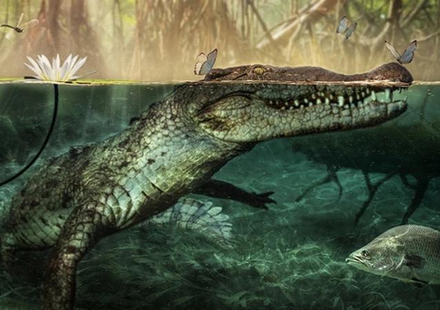 El cocodrilo 'C. checchiai'