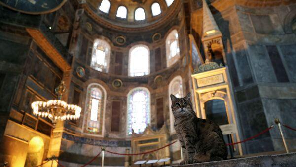 El gato Gli en la mezquita Santa Sofía, en Estambul - Sputnik Mundo
