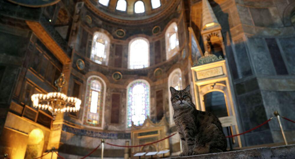 El gato Gli en la mezquita Santa Sofía, en Estambul