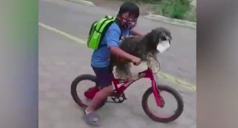 Un niño le pone una mascarilla a su perro antes de montar juntos en bicicleta