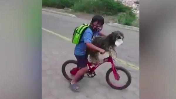 Un niño le pone una mascarilla a su perro antes de montar juntos en bicicleta - Sputnik Mundo