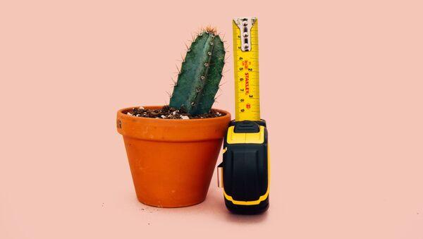 ¿15 centímetros? El pene erecto promedio resulta ser más pequeño de lo que se creía - Sputnik Mundo