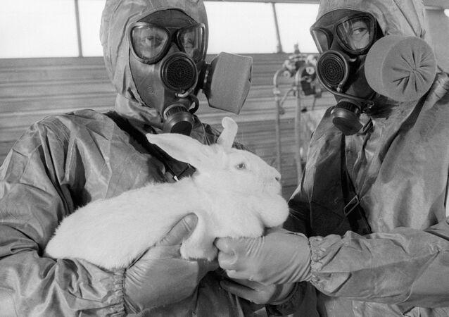Una prueba de armas quínicas en un conejo (archivo)