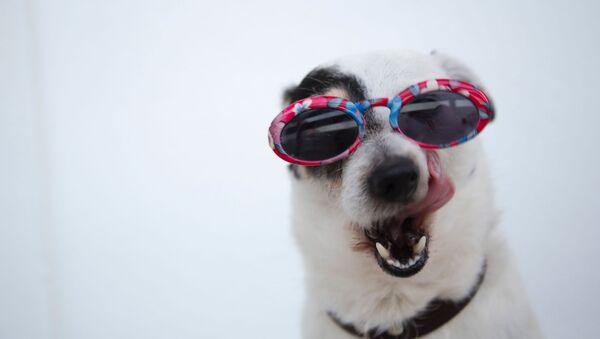 Si al perro le gustan los dulces, denle unos tomates cherri o calabaza. Las galletas o los dulces vegetarianos no son adecuados para perros, recomendaron los especialistas. - Sputnik Mundo