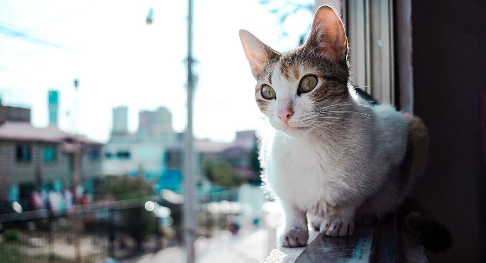 Un gato, foto de archivo