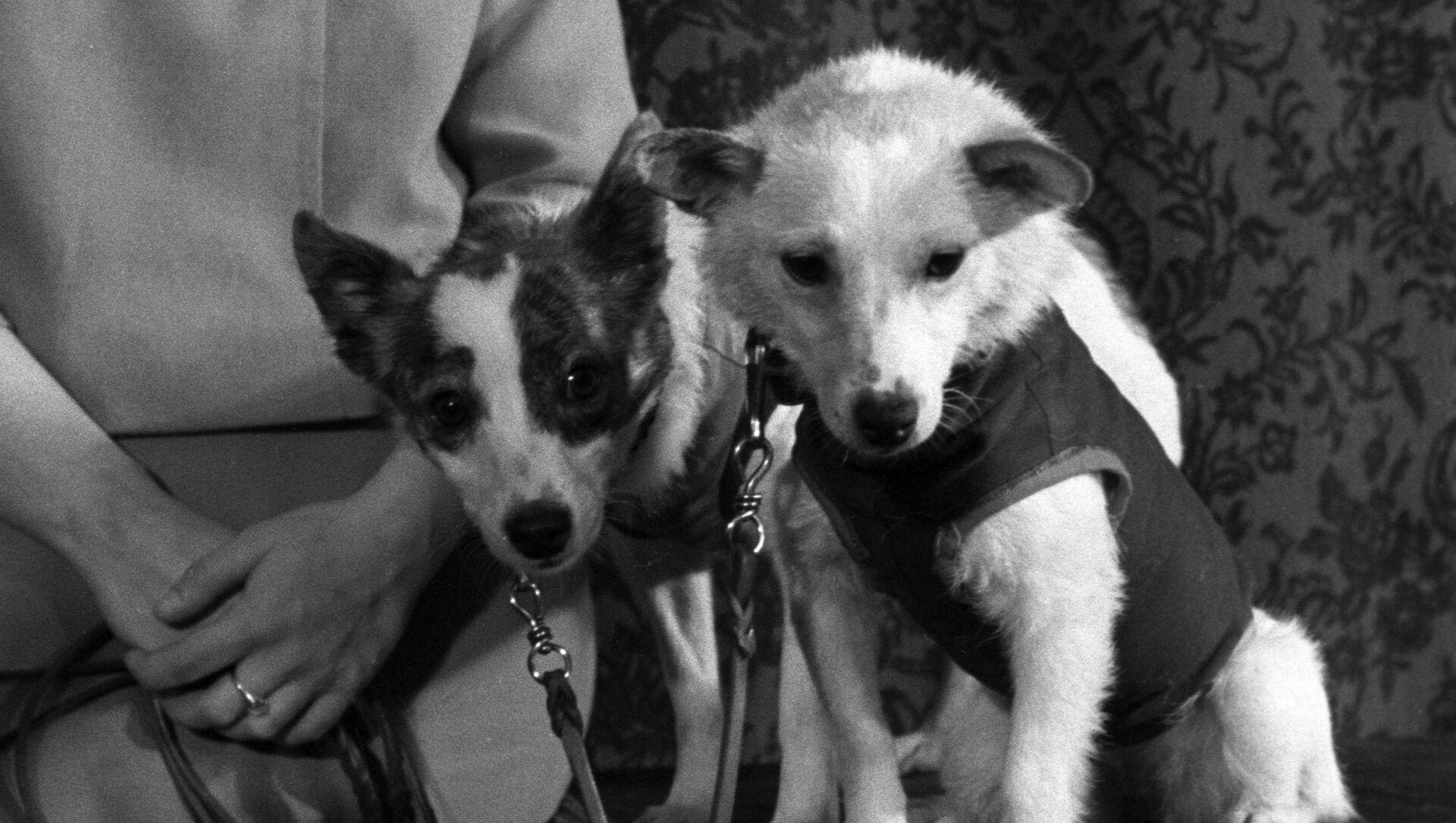 Belka y Strelka, las perritas que conquistaron el espacio - Sputnik Mundo, 1920, 17.08.2020